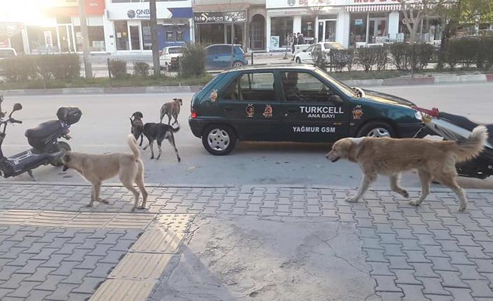 Mut'ta Başıboş Gezen Köpeklerin Sorumlusu Olarak Karaman Belediyesi Gösterildi