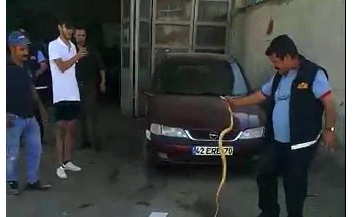 İtfaiyecilerin Otomobile Giren Yılanla İmtihanı