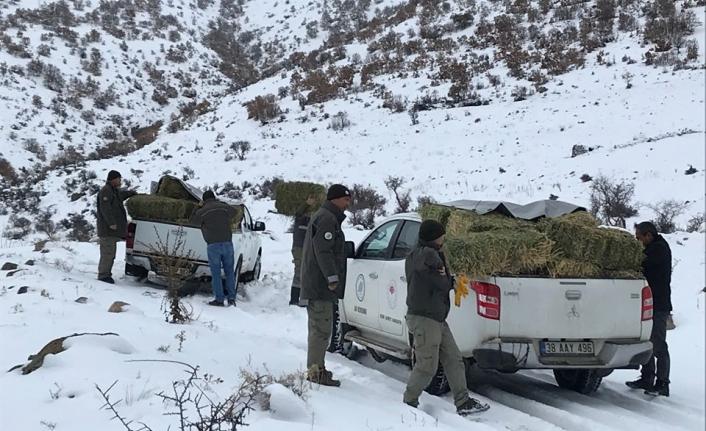 Karadağ'da Yaban Hayvanları Unutulmadı