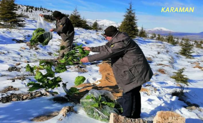 Karaman'da Yaban Hayvanları İçin Kar Üzerine Yem Bırakıldı