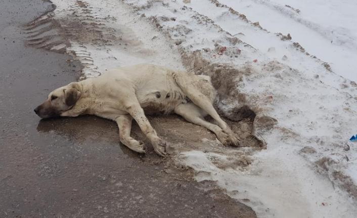 Yaralı Halde Bulunan Köpek Tedavi Altına Alındı