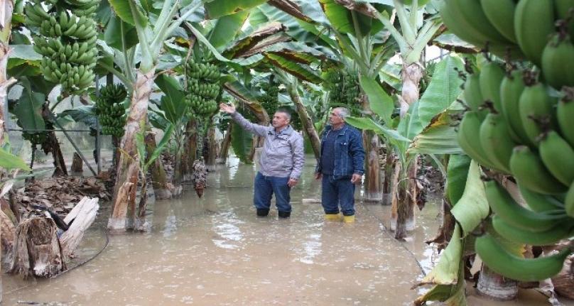 Erdemli'de 2 Bin Dönüm Muz Serası Sular Altında