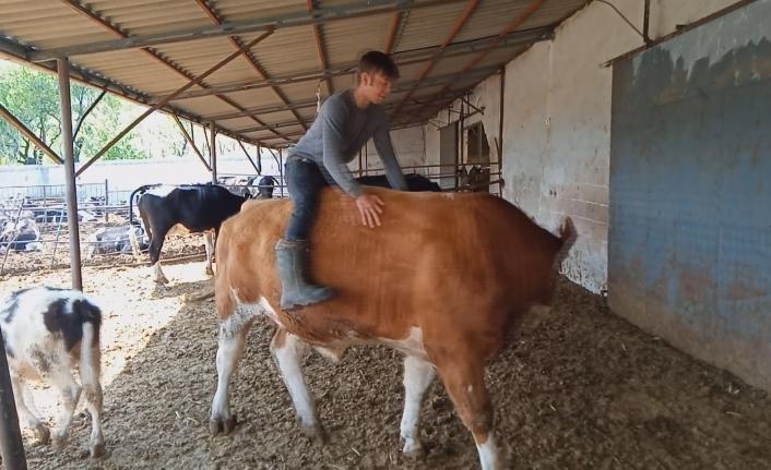 Karamanlı Genç Boğaya Binerek Rodeo Yaptı