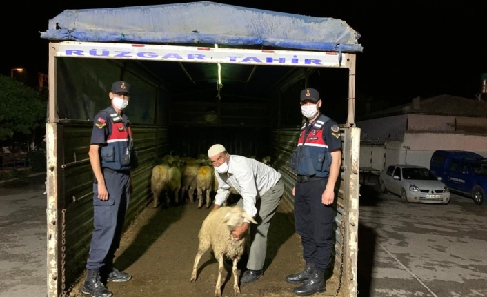 40 Küçükbaş Hayvanı Çalan 7 Şüpheli Suçüstü Yakalandı