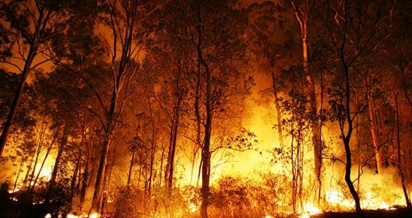 Türkiye'de Yanan Orman Alanlarının %98'i İnsan Kaynaklı