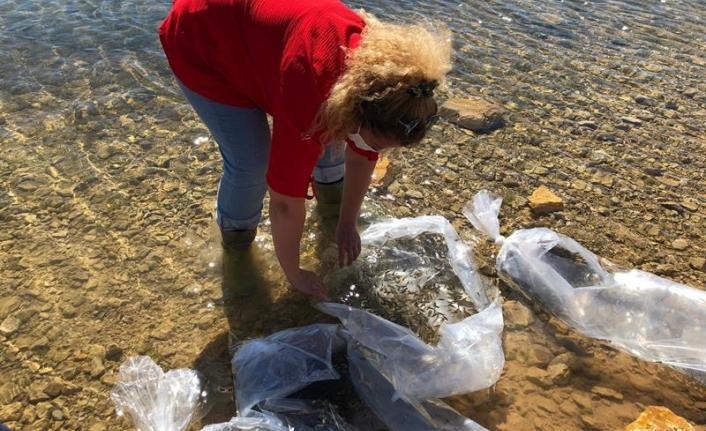 Karaman'da İki Baraja 25 Bin Balık Bırakıldı