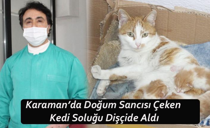 Karaman'da Doğum Sancısı Çeken Kedi Soluğu Dişçide Aldı