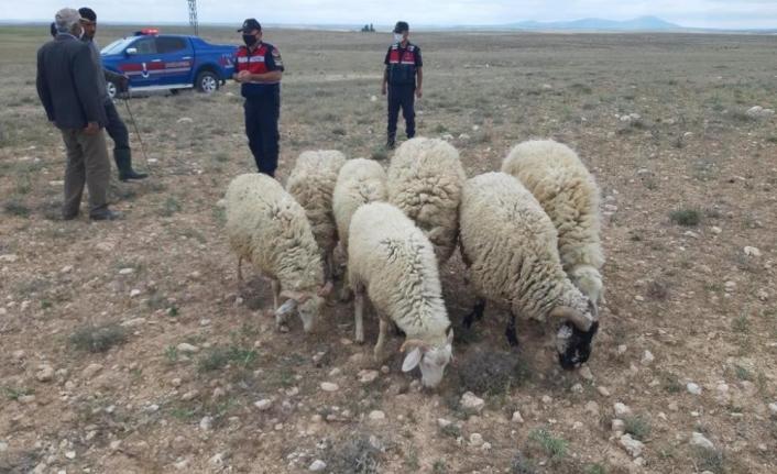 Jandarma Kayıp Koyunları Drone İle Buldu