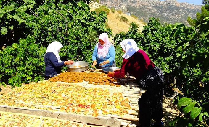 Türkiye'nin Tek Farklı İklimine Sahip Köyünde İncir Pestili Yapıyorlar