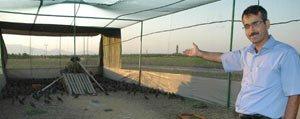 Kinali Kekliklere Uçus Ve Kanat Açma Egitimi Veriliyor