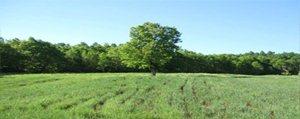 Karaman'da 534 Hektar 2/B Kapsamina Giren Arazi...