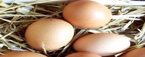 Yumurta Alirken Dikkat !