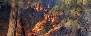 Karaman`da Orman Yangini