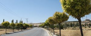 Vatandas: Karaman Belediyesi Ve Agaçlar Allah`a Emanet...