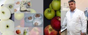 KMÜ'den Elma Kurutmaya Yönelik Bilimsel Proje