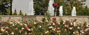 Gül Bahçesi'ndeki Güller Mest Ediyor