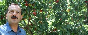 Bifa'nin Örnek ve Dogadan Tarim Bahçelerinde Kiraz...