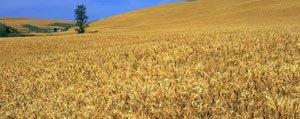 Arazi Toplulastirilmasi Ve Tarla Içi Gelistirme Hizmetleri...