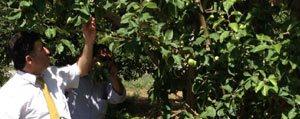 Meyve Bahçelerinde Don Zarari Ödemesi Basvurulari...