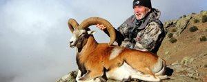 Bir Anadolu Yaban Koyununu Avlamak Için 90 Bin Lira...