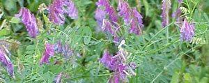 Yem Bitkileri Üretimi Desteklemesi Icmalleri Askida