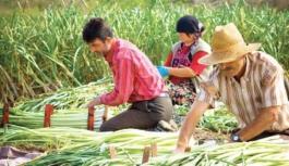 Küçük Aile İşletmelerine Tarımsal Destek