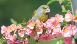 Karaman'ın Kuşları Sergilenecek