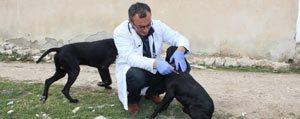 Kuduz Hastaligi Asilama Kampanyasi Baslatildi