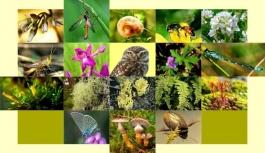 Biyolojik Çeşitlilik Envanter Ve İzleme Projesi...