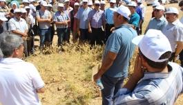 Karaman Nohut Üretiminde Türkiye'de 7. Sırada