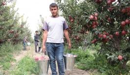 Karaman'da Elma, Soğuk Hava Depolarına Girmeye...