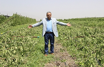 Karaman'da Dolu Yağışının Zarar Tespit Çalışmaları...