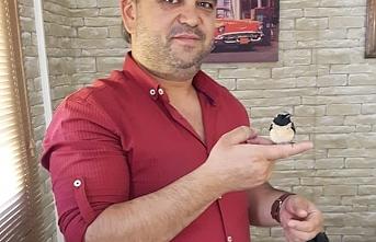 Ölmek Üzere Olan Kuşu Kalp Masajıyla Hayata Döndürdü