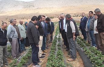 Karaman'da Çilek Üretimine Destek