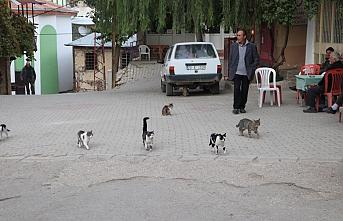 Kedilerin Meydan Nöbeti, Köylüye Balıkçıyı...