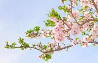 Baharın Müjdecisi 1. Cemre Havaya Düşecek
