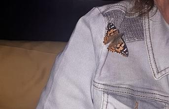 Mersin'i Kelebekler Sardı