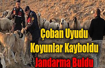Kayıp Olan Koyun Sürüsünü Jandarma Buldu