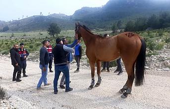 Kaybolan 100 Bin Liralık At, Ormanlık Alanda Bulundu