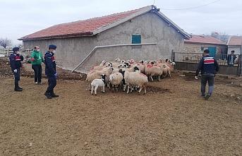 Jandarma'dan Koyun Operasyonu