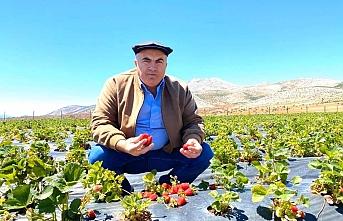 """Bayram: """"Karaman'da Üretilen Çileklerin Aroması..."""