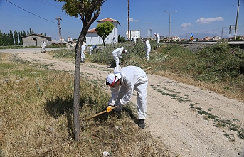 Karaman Belediyesi Yabani Ot Temizliği Yapıyor
