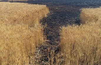 Karaman'da Çıkan Yangında Buğday Tarlası Kül Oldu