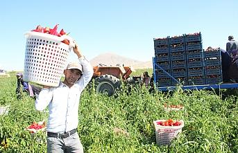 Karaman'dan 15 İle Salçalık Biber Satışı