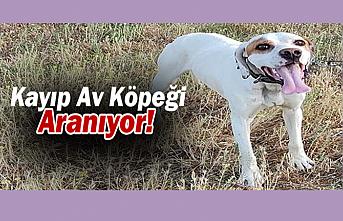 Karaman'da Kayıp Av Köpeği Aranıyor