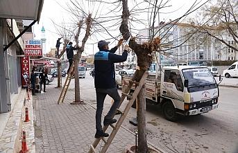 Karaman Belediyesi Ağaçları Budayarak Geri Dönüşüme...