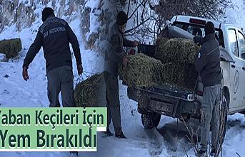 Karaman'da Yaban Keçileri İçin Yem Bırakıldı