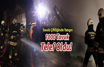 Konya'da Tavuk Çiftliğinde Yangın: 1000 Tavuk Telef Oldu