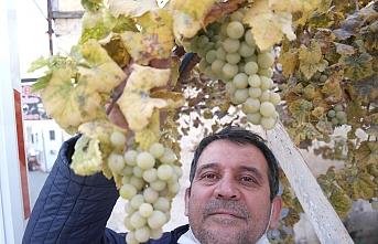 Tarsus İlçesinde Kışın Ortasında Dalında Üzüm