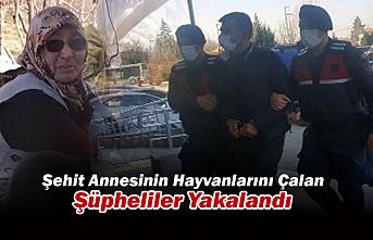 Konya'da Şehit Annesinin Hayvanlarını Çalan Şüpheliler Yakalandı